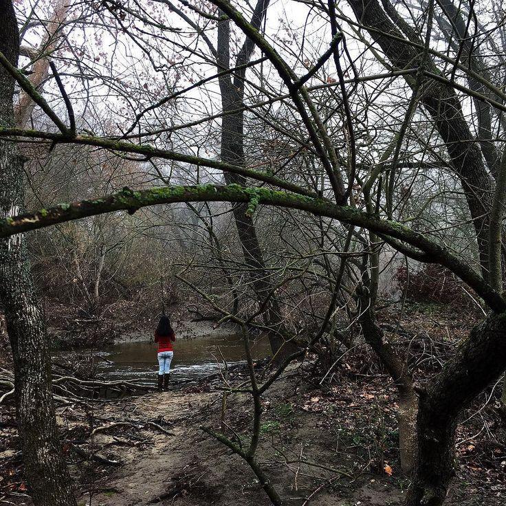 Forest #justgoshoot #mobiography #vscocam #eyeem # by ashwin_prsd