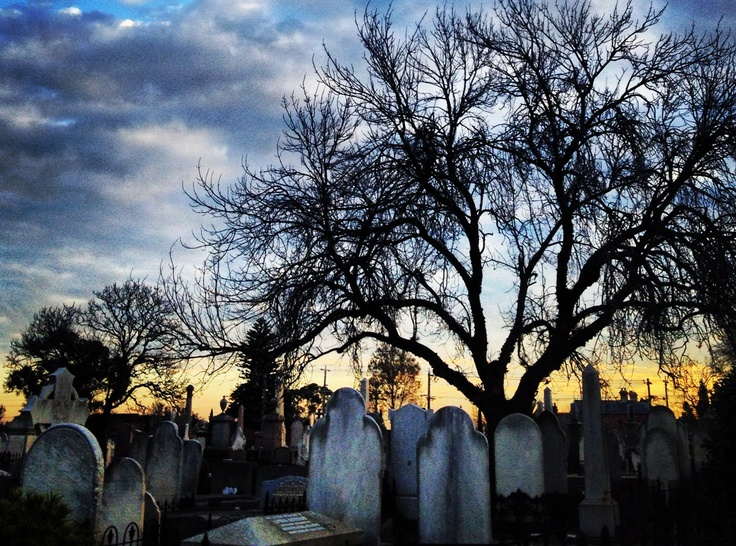 Trees are symbolic of life after death. #slowdown