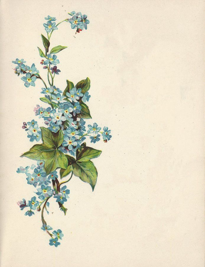 I'm envisioning one of Pres. Uchtdorf's quotes about forget-me-nots on this. Pretty.