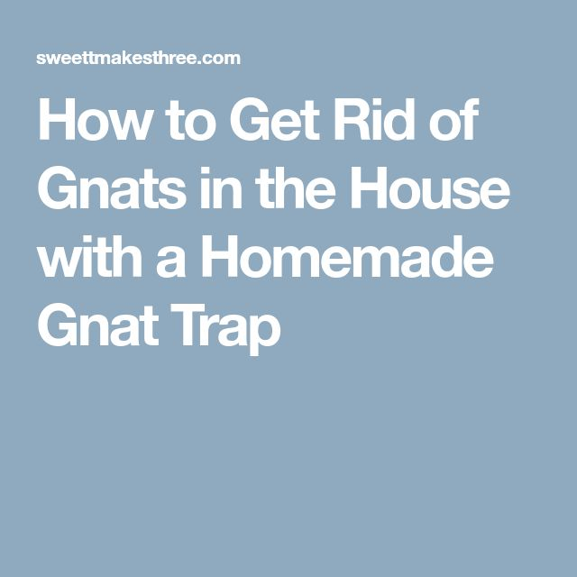 How to Get Rid of Gnats in the House with a Homemade Gnat Trap