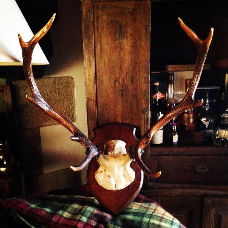 Luxury Scottish Travel blogger-Part of the Sandgrouse Travel and Expeditions Team (Luxury tailor made vacations in Scotland). Edinburgh, Scotland🇬🇧   😍 #antique #antiqueshop #brocante #vintage #deer #antlers #stag #hunting #hunt #tweed #tartan #edinburgh #whisky #whiskey #dalmore highlands #scotland #wood #chasse #cerf #countryside #countrystyle #equestrian #campagne