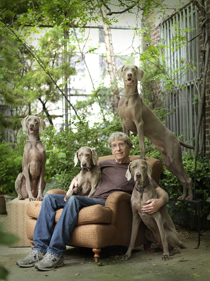 William Wegman photographed at home in New York with his Weimaraner Dogs by Rachael Hale McKenna for her book The New York Dog #dogs #pets #Weimaraners Facebook.com/sodoggonefunny