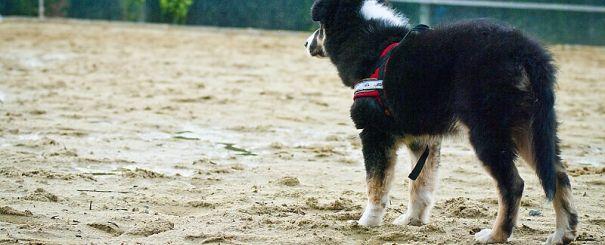 Jak naučit psa, aby se nebál čištění uší, vysavače a dalších věcí se dozvíte v Červíkově deníčku...