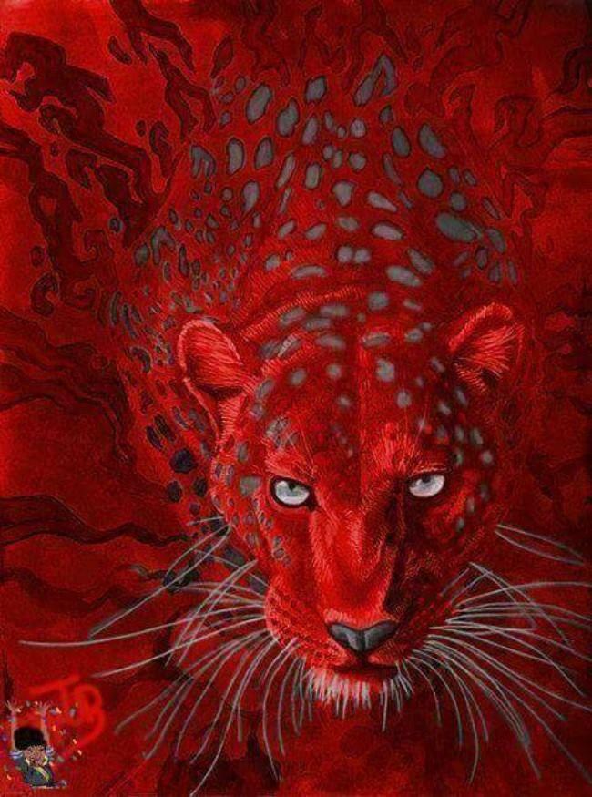 Vermelho: é uma cor estimulante e excitante, possui associação positiva para a paixão, força, atividade e aconchego e uma negativa para agressividade, raiva, intensidade e sangue.  A sua agressividade masculina é sempre ligada ao combate, dominação e rebelião.