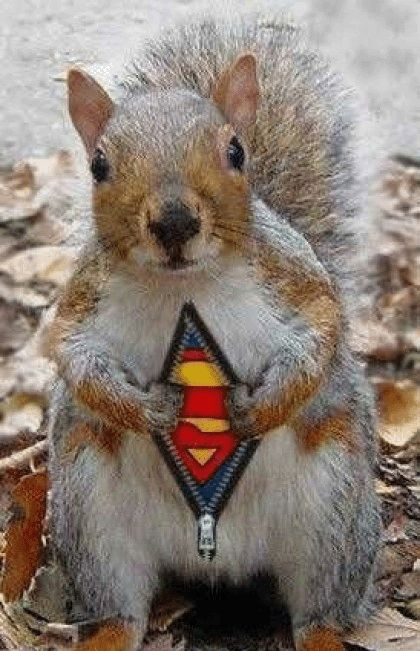 Now this is funny!  I think some of the squirrels that run around on my roof think they are superman!