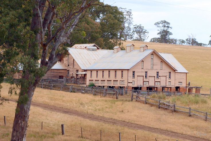 Warrock Shearing Shed by Clive
