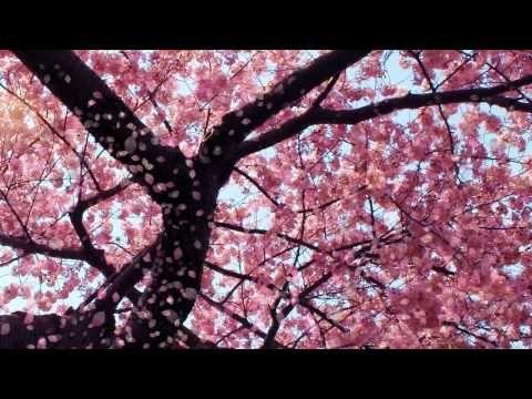 Cherry Blossom Video Designed By Dreamscene Org Youtube In 2020 Maria Callas Opera Music Anime Music