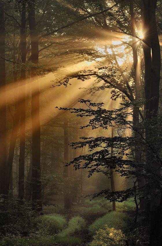 'Burning Forest', Eifel, Rheinland-Pfalz, Germany by Ingrid Lamour. #plocomiSights