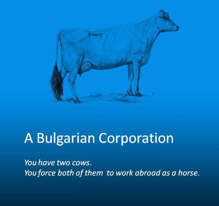 16 Best Cow Economics Images On Pinterest Economics