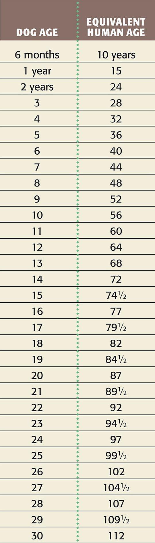 Dog age vs human age.