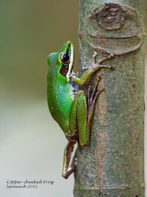 Cute little frog!  :D
