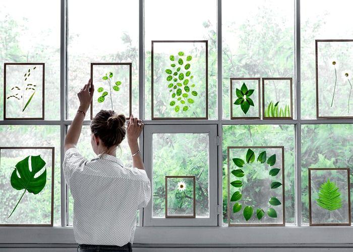 額装ボタニカルを窓辺に飾ると、外の景色も透けて見えてとってもおしゃれ。植物もほんのりと透けるので、光をうまく取り入れられる飾り方です。