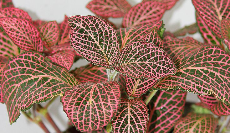1000 images about house plants care on pinterest for Www houseplant net