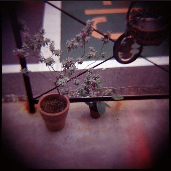 Plant Luurve