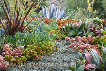 A dymondia pathway makes it possible to access a succulent garden in my own back yard. Photo and design by Debra Lee Baldwin.