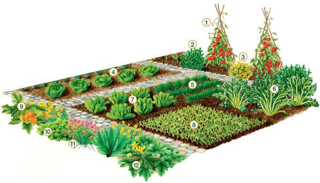Plan De Potager Vilmorin Pour Debutants Potager Plan Potager Potager Permaculture