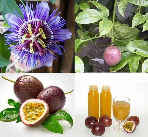 thai passion flower seeds purple granadilla passiflora by stseed, $1.75