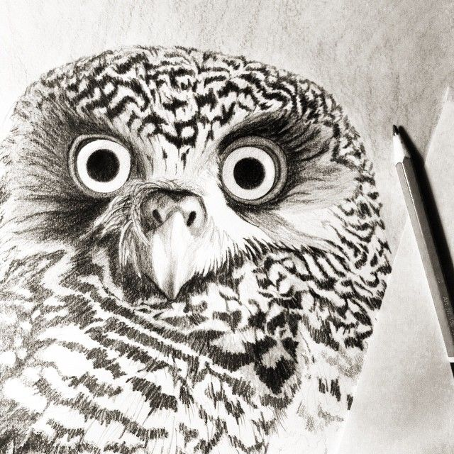 I'm watching you...#pencil #tonal #drawing of a #powerful #owl #wip