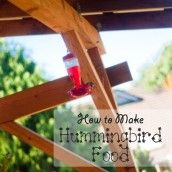 best 25 hummingbird food mixture ideas on pinterest hummingbird hummingbird feeder recipe food coloring can you use red food coloring in hummingbird food