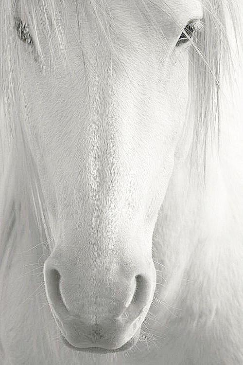 Weißes Pferd... Wie süß!!!                                                                                                                                                                                 Mehr