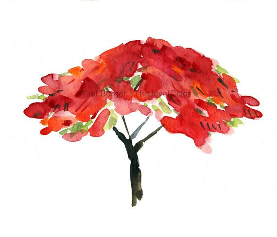 Like Fire  art print Poinciana tree print by TheJoyofColor on Etsy
