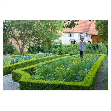 GAP Photos - Garden & Plant Picture Library - Cottage vegetable garden with Buxus sempervirens - Box parterre and scarecrow - GAP Photos - Specialising in horticultural photography