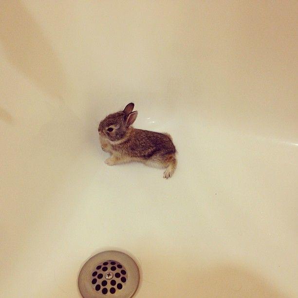 tiny baby rabbit