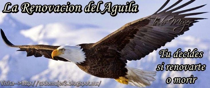la+renovacion+del+aguila.jpg (765×322)