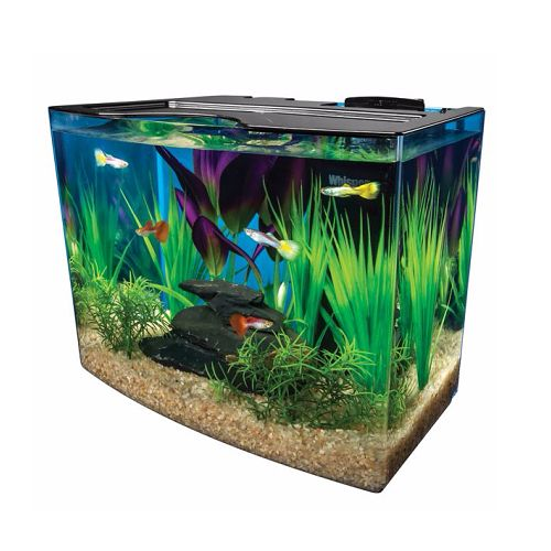 151 best betta fish tanks images on pinterest aquariums for Betta fish tanks petsmart