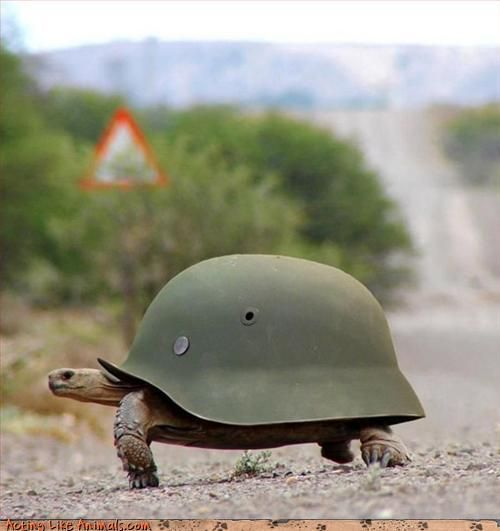 Haha, this turtle has an army hat as a shell! LOL