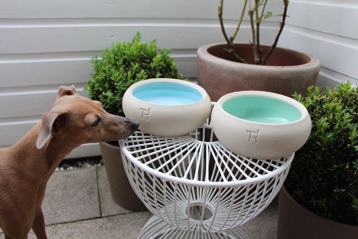 Tolle Zubehör für Hunde von Treusinn: Lola liebt Ihre neuen Näpfe