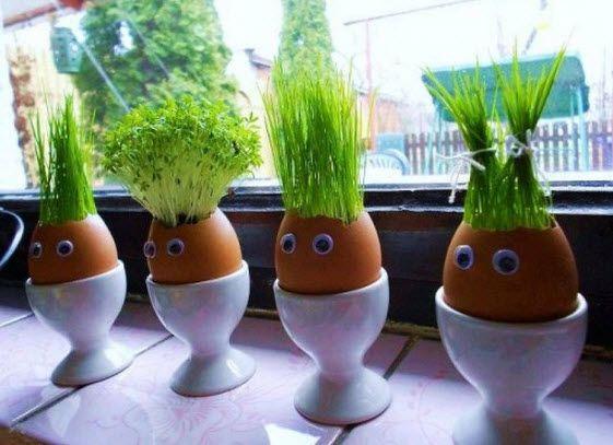 Comment faire des pots de fleurs en coquilles d'oeufs • Quebec echantillons gratuits