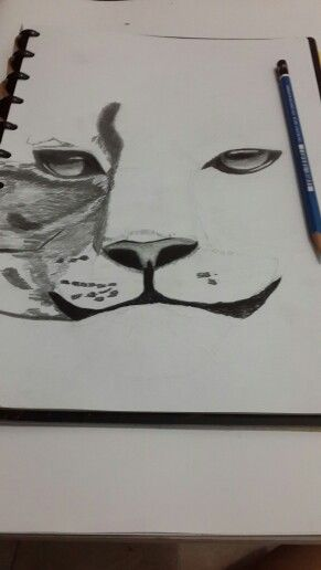 How to draw a tiger....