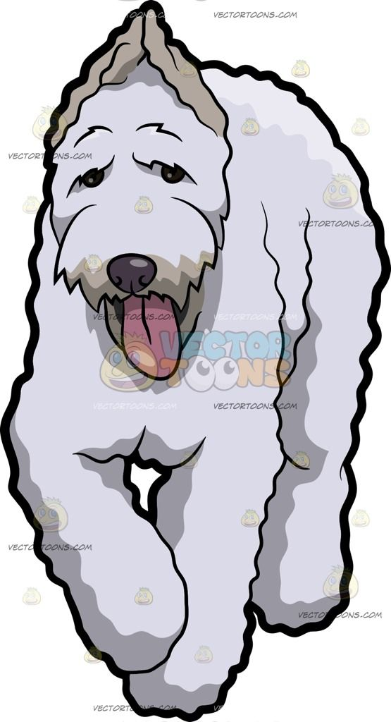 A Tired Giant Schnauzer Dog :  A dog with white coat and beard walking ahead while parting its lips to reveal a pink tongue  The post A Tired Giant Schnauzer Dog appeared first on VectorToons.com.   #clipart #vector #cartoon