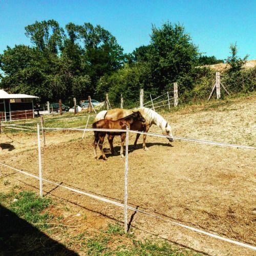 River Ranch in Bellante