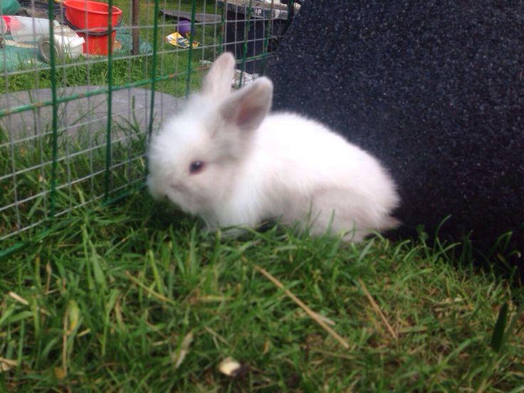Super gullig kanin på gräset