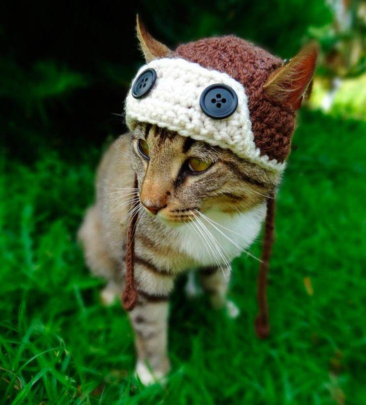 Artista cria chapéus de crochês para gatos ficarem mais estilosos