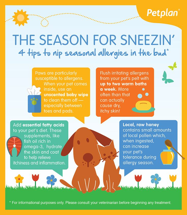 Image For Signs Your Dog Is Suffering From Seasonal Allergies
