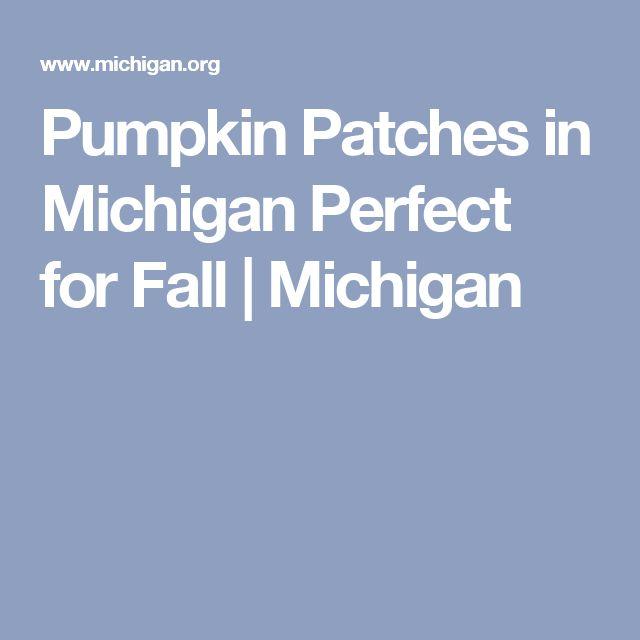 Pumpkin Patches in Michigan Perfect for Fall   Michigan