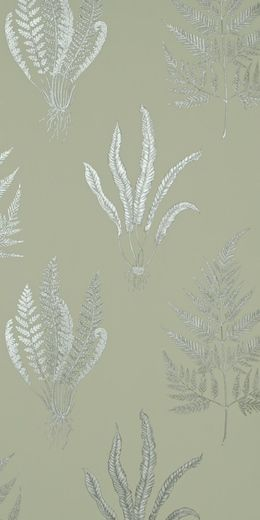 Woodland Ferns (W) by Sanderson Wallpapers   Store — FABRIC STUDIO STORE