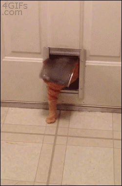 fat-cat-stuck-in-pet-door