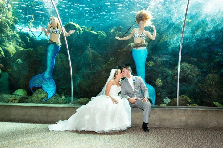 Florida Beach Wedding With Aquarium Reception: 1000+ Images About Aquarium Wedding Ideas On Pinterest