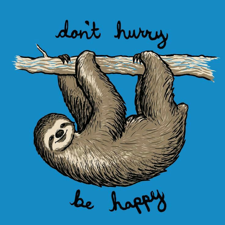 Don't hurry, be happy. #sloth