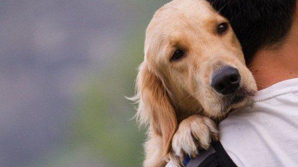 Petition · Abschaffung der Hundesteuer per Gesetz, Forderung sozial angemessener Tierarztrechnungen · Change.org