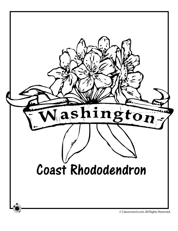 state flower coloring pages. State Flower Coloring Pages Washington Page  Classroom Jr 59 best Homeschooling stuff images on Pinterest