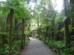 El bosque tropical neozelandés Fox Glacier 2846061