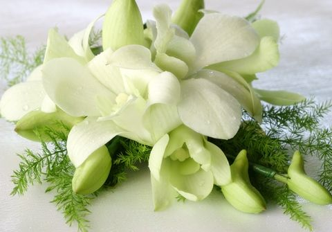 Delicate Darling - White Orchid Corsage | Wholesale White Orchid Corsages | Buy White Orchid Corsages | Discount White Orchid Corsages at BunchesDirect