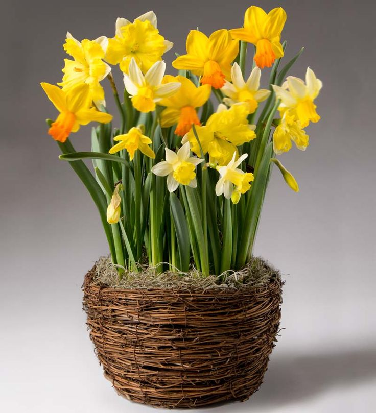 Flower Bulb Gift Baskets : Best plow hearth images on cozy nook