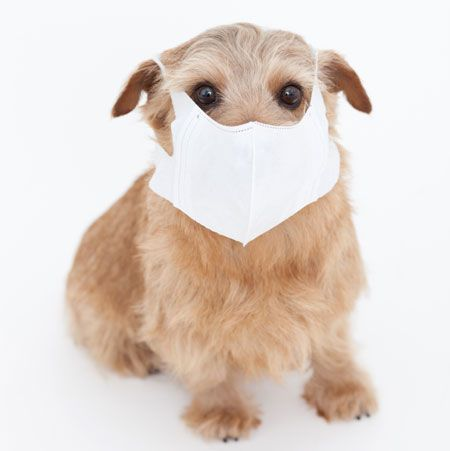 HAVE ALLERGIES? HERE ARE 5 BREEDS OF DOGS FOR YOU!
