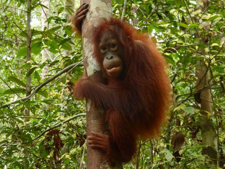 Borneo Holidays 2020 & 2021 TailorMade from Borneo